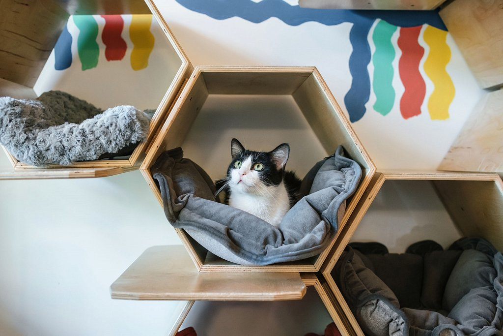Purrington's Cat Lounge - III
